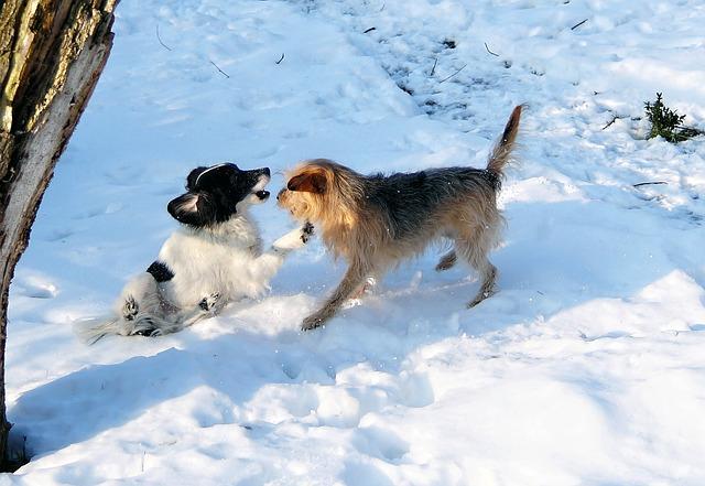 hipotermia perros