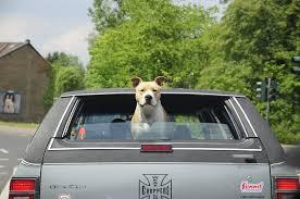 perro viaje