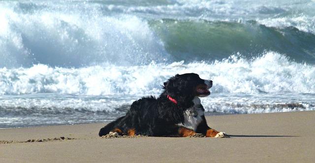 playa_perros