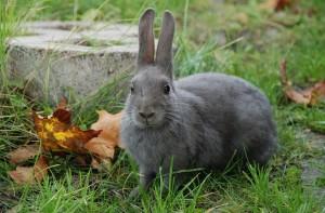 adoptar un conejo