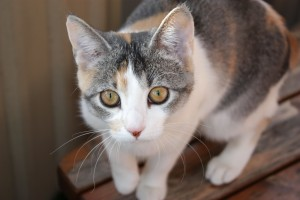 Razones de estreñimiento en gatos