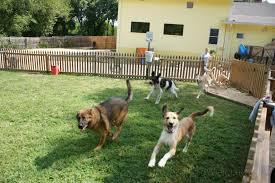 residencia canina