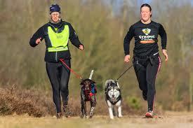 disciplinas deportivas para perros