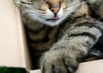 gato_caja