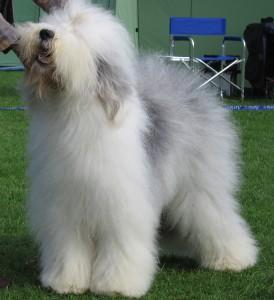 muda de pelo del perro