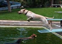 perro_piscina