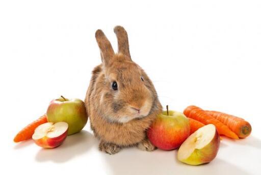 frutas y verduras que comen los conejos